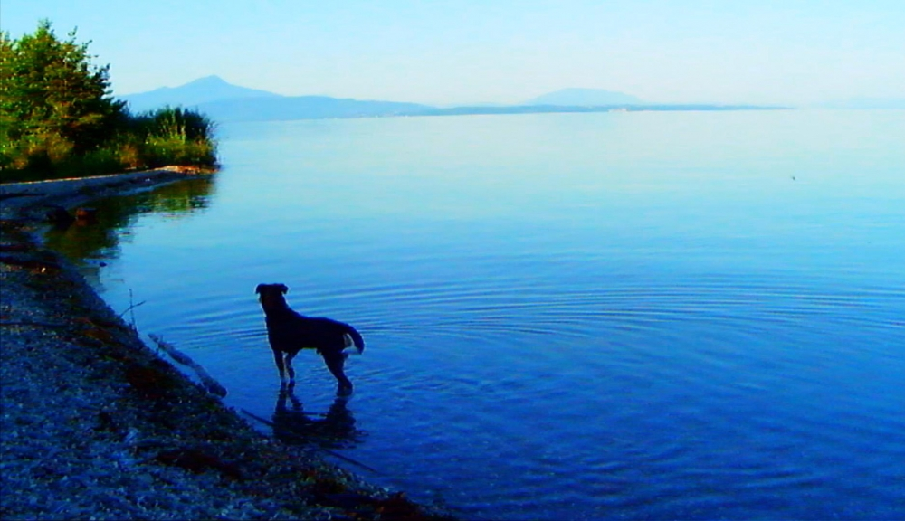 adieu-au-langage-2014-002-dog-by-the-sea