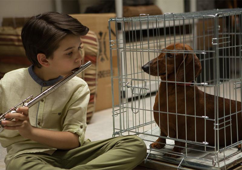 primary_Wiener-Dog-Sundance-2016